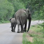 The South African Elephant wave