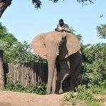 Madwala Elephant interaction