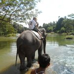 Pinnawala Elephant Safaris