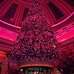 The Dome Edinburgh - Best decorated tree in town!