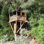 Agriturismo Montalbino - The tree house