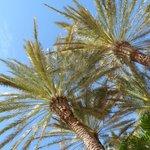 Ahh Palms