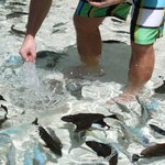 Tons of fish in the lagoonarium.  Don't even have to snorkel, they are everywh