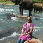 Elephant Orphanage at Kandy