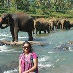 Elephant Orphanage- Kandy