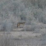 coyote we say on resort interpretive trail