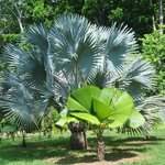 Palm on hotel grounds