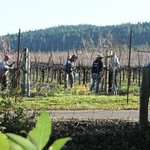 Vineyard workers outside the Madrones