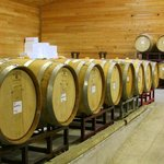 The barrel room in the winery -- a chilly place in January.