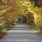 autumn neighbourhood