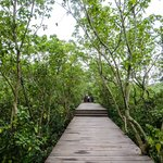 The Mangrove nature trail again
