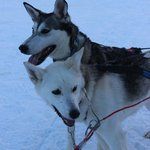 ice hotel huskies