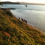 Horses and their riders are not an uncommon sight in Kawhia