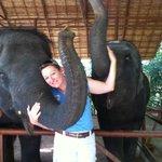Baby Elephants at Siam Safari