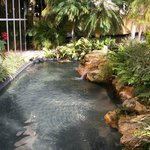 lovely pond leading into the pool area