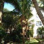 Kockos palm