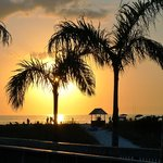 palm trees on walk to beach