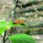 Serre à papillons