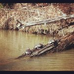 turtle sighting on private lake