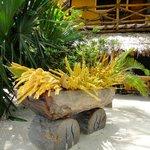 Mawimbi's garden