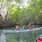 kayaking in the mangroves of Puerto Jimenez!