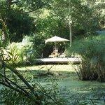 prachtige vijver in de tuin achter het hotel