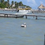 A Pelican...one of the many birds on the island