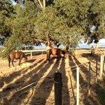 horses in the paddock next door