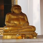 Happy Buddha near to Bodhi tree