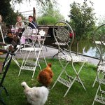 Cute little terrace with chickens running around