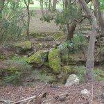 Bushland at Morvern Valley