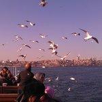 Feeding the seagulls en route