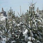 Hiver et neige au pays de Dabo