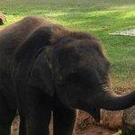 Onsite elephant - Lucky