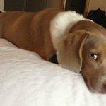 Pet Friendly Rooms & Treats