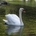 Swan Tidepools