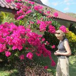 Front of our chalet - Veranda behind Bougainvillea