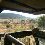 Uitzicht vanuit de safariwagen op Pilanusberg National Park
