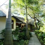 Palmbomen op het mooie parkachtige terrein