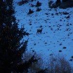 Deer behind the Rustic Inn