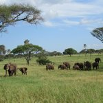 More elephants at Tarangire