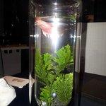 Interesting table decoration: small aquarium
