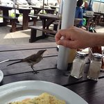 birds are so tame they will come and eat out of your hand - at least someone w