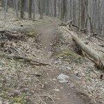 trail along flat section