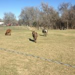 alpacas and donkeys
