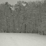Vista nel bosco retrostante durante una nevicata