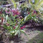 piante nel giardino dell'hotel