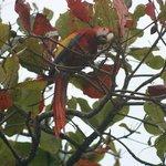 pappagallo su un albero dell'hotel