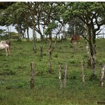 horses on finca grounds
