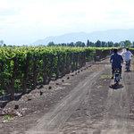 Eco Bikes Wine Tours